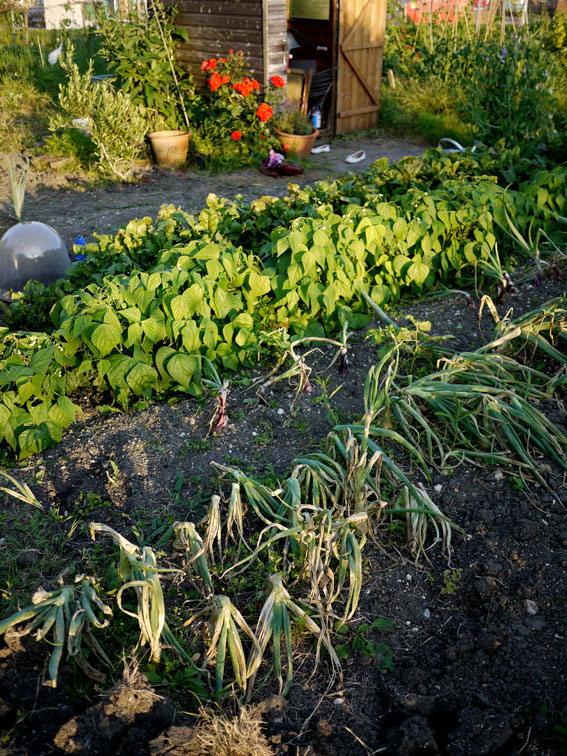Allotment July 2012