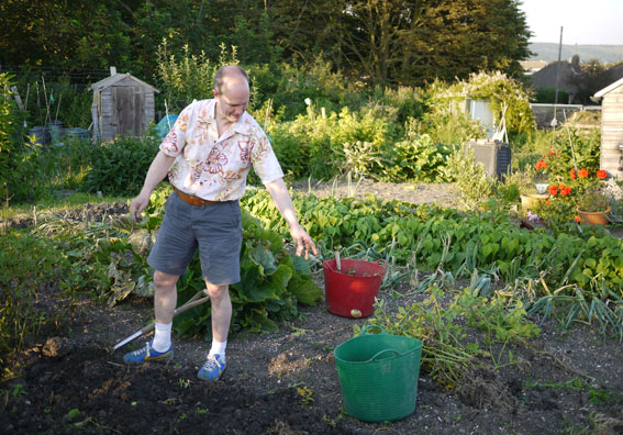 potato harvest at allotment 2012